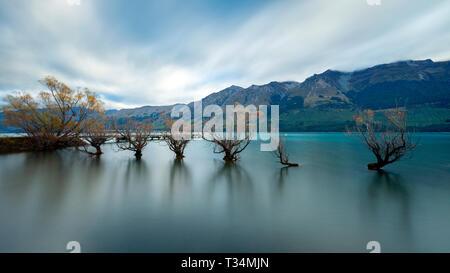 Saule de Glenorchy, Lac Wakatipu, Région de l'Otago, île du Sud, Nouvelle-Zélande Banque D'Images