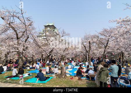 Des gens assis et avoir des pique-niques, sur feuilles bleu et vert, en vertu de cerisiers dans le jardin Nishinomaru au château d'Osaka, château de garder à l'arrière-plan. Soleil, ciel bleu. Banque D'Images