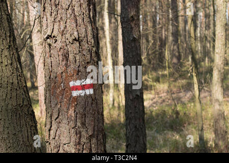 Route sign painted on pine tree in forest Banque D'Images