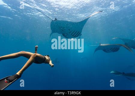 Free diver nage dans le cadre de l'école océanique géant manta, Manta birostris, aux Palaos Banque D'Images