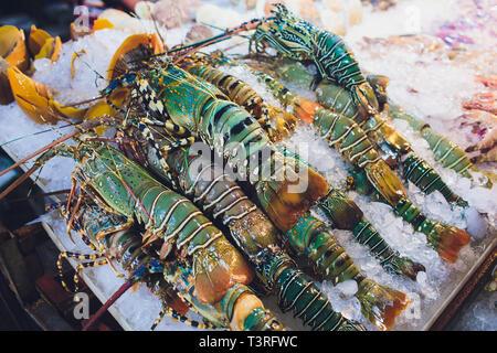 Homards frais sur la glace pour la vente au restaurant. Selective focus sur le sombre le homard. Banque D'Images