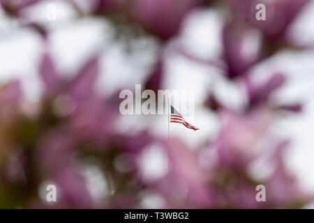 Le drapeau américain sur le sommet de la Maison Blanche encadrée par Magnolia arbre en fleurs au printemps le long de la pelouse Sud de la Maison Blanche le 8 avril 2019 à Washington, DC.