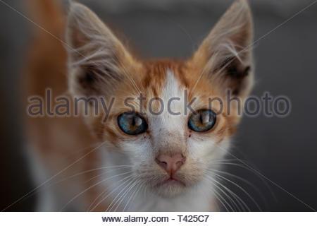 Chat tigré orange photographie Banque D'Images
