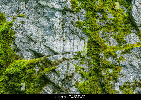 La mousse sur une paroi rocheuse. Relief et texture de la pierre avec des motifs et de la mousse. Fond naturel en pierre. Pierre avec mousse. Banque D'Images