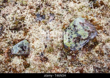 La mousse sur une paroi rocheuse. Relief et texture de la pierre avec des motifs et de la mousse. Fond naturel en pierre. Pierre avec mousse. Blocs de pierres couvertes de mousse. Banque D'Images