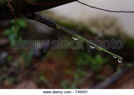 Gouttes de pluie sur une feuille Banque D'Images