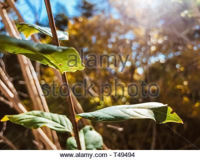 Plante à feuilles vert dans macro shot Banque D'Images