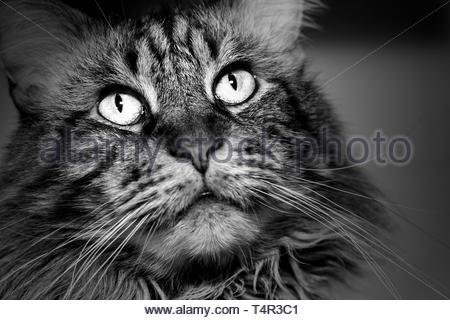 La face d'un chat de près. Banque D'Images