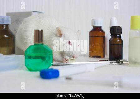 Des expériences sur des rats dans le nom de cosmétiques concept. rat est le symbole du Nouvel An chinois 2020 accueil de décoration.. Parmi les flacons de médicaments Banque D'Images