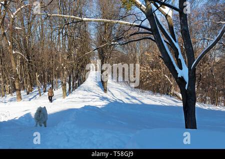 Allée couverte d'un parc de la ville de la neige sur une journée ensoleillée contre un ciel bleu. L'homme avec son chien va pour une promenade. Banque D'Images