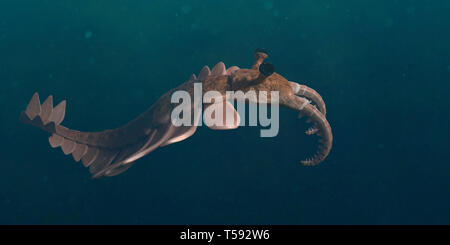 Anomalocaris, forme de vie de la période cambrienne (illustration 3d paleoart)