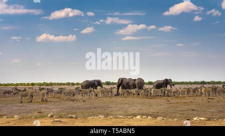 Les éléphants et les zèbres à un étang dans le parc national d'Etosha, Namibie Banque D'Images