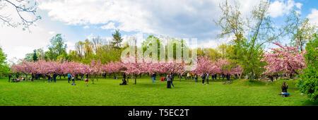Bucarest, Roumanie - 20 Avril 2019: cerisiers et les touristes dans le jardin japonais du roi Michel I de Bucarest (anciennement Parc Herastrau P Banque D'Images