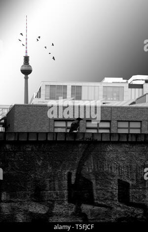Un corbeau debout sur un fond sombre et de graffitis avant une série de bâtiments commerciaux rectangulaire et la tour de télévision.