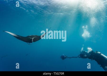 Vue côté gros plan d'action en tant que plongeur caméraman films raie manta géante en passant par avec caméra 3D Banque D'Images