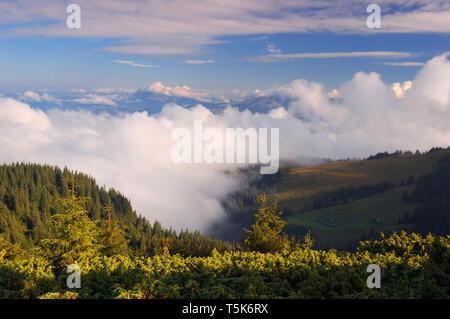 Belle matinée de brouillard dans les montagnes. Paysage d'été avec la forêt d'épinettes dans la vallée. Météo ensoleillée avec de beaux nuages Banque D'Images