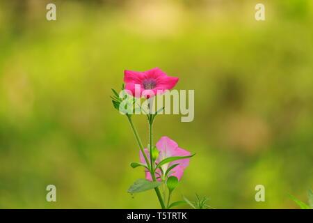 Plus belle fleur Banque D'Images