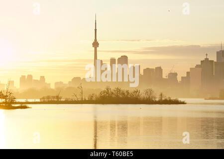 Toronto Waterfront skyline au coucher du soleil avec brouillard cormorant bird colony dans le parc Tommy Thompson au milieu. Banque D'Images