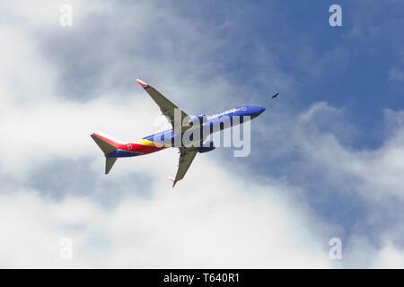 Numéro de vol Southwest Airlines WN4266 (queue numéro N8656B), décollant de Baltimore/Washington International Thurgood Marshall Airport (BWI) le 20 avril 2019, comme vu de Glen Burnie, Maryland; son nez à la recherche d'être dirigé tout droit vers un planeur oiseau, peut-être un urubu. L'avion, devrait partir pour Las Vegas, Nevada à 3 h 45 HAE, est photographié à 3:48 P.M. EDT, contre le ciel bleu et les cumulus de beau temps. Par la Federal Aviation Administration des États-Unis, il y a eu quatre 'impacts fauniques' cette année entre les oiseaux et les avions/avions à BWI à compter du 28 février.