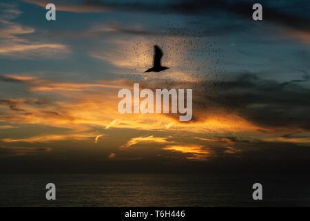Silhouette d'un oiseau passant pendant le coucher du soleil sur une plage de Sao Miguel, Açores Banque D'Images