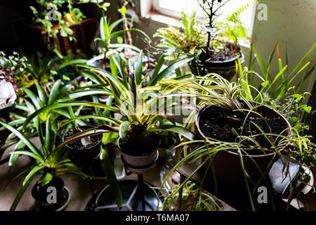 De nombreux espaces verts jardin plantes d'intérieur en hiver par l'arrière-cour en vue de la fenêtre sous-sol maison en hiver