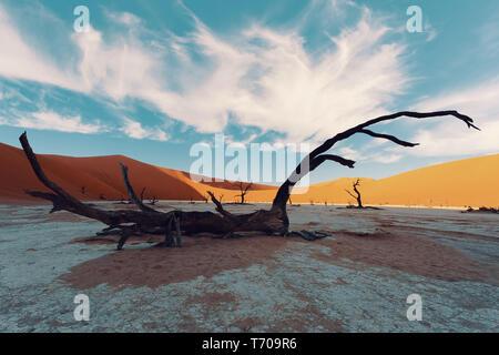 Dry acacia dans Mort à Sossusvlei, Namibie Banque D'Images