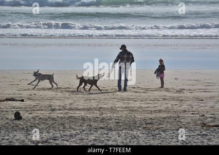 L'homme et de sa fille sur la plage avec deux chiens 2 Banque D'Images