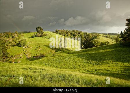 La Nouvelle Zélande paysage avec l'arc-en-ciel près de Marokopa Falls, île du nord de la Nouvelle-Zélande. Banque D'Images