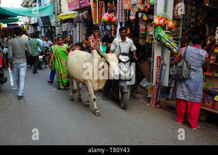 Rue commerçante animée sur le marché, avec des vaches sacrées, Mandvi, Gujarat, Inde, Asie