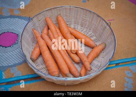 Bébé frais dans le panier . Les jeunes carottes orange lumineuse et fraîche avec des dessus de légume, dans un panier en osier. La récolte de printemps. La racine est dans le panier . Banque D'Images