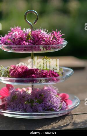 France, Morbihan, le jardin d'heures à l'extérieur qui propose des visites guidées et dégustation de fleurs Banque D'Images