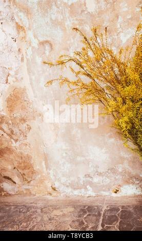 Vieux mur de béton jaune sale ou texture background jaune fissurée plâtre sur le mur de ciment Trois couleurs dans un vieux mur de béton style Vintage Banque D'Images