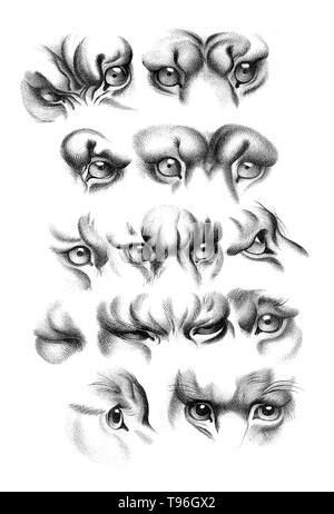 L'objectif de physiognomy est à juger les gens en fonction de caractéristiques du visage. Charles Le Brun (24 février 1619 - 12 février 1690) était un peintre français, théoricien d'art, décorateur et peintre de la cour de Louis XIV.