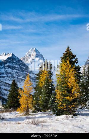 Le parc provincial du mont Assiniboine, Colombie Britannique, Canada Banque D'Images