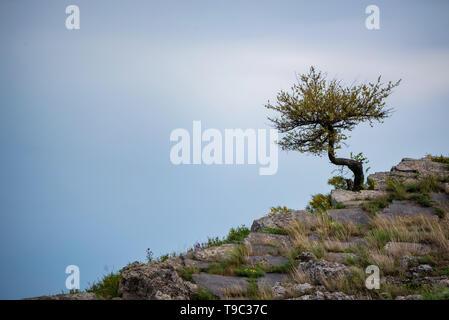 Lonely tree pousse sur les pentes rocheuses dans la steppe Banque D'Images