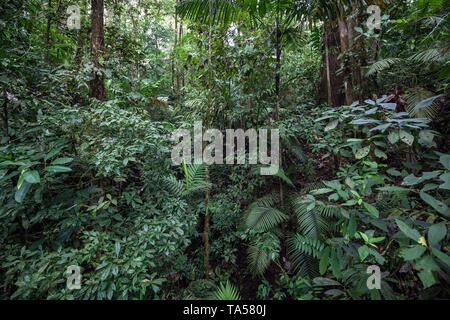 La végétation de forêt tropicale humide, Mistico Arenal Suspension Bridge Park, Mistico ponts suspendus d'Arenal Park, province d'Alajuela, Costa Rica Banque D'Images