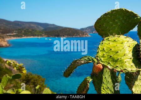 Une vue panoramique sur la Spiaggia di Mari Pintau et sur la mer Méditerranée en Sardaigne, Italie, avec un cactus dans l'avant-plan Banque D'Images