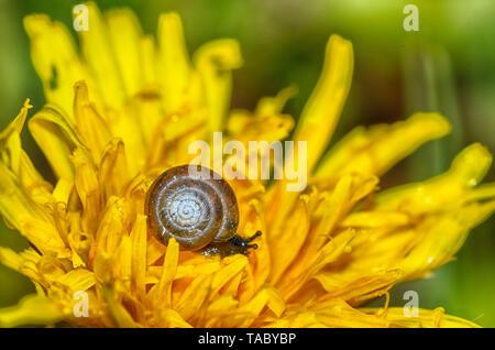 Un petit escargot se bloque sur une plante.Ce clam a un évier rond .