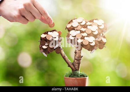 Pièces de petite plante en pot sur le marché du plein air Banque D'Images