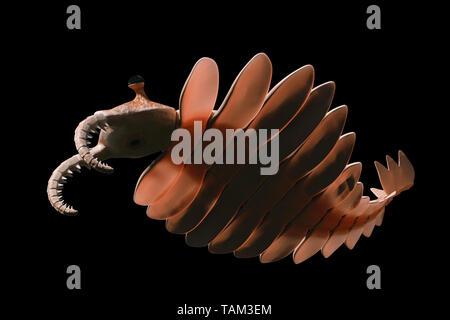Anomalocaris, créature de l'explosion cambrienne, isolé sur fond noir (3d paleoart illustration)