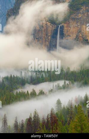 Bridalveil Falls, et le brouillard, Yosemite National Park, California, USA, par Bill Lea/Dembinsky Assoc Photo
