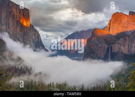 El Capitan et Cathedra Rocks, le soir, coucher de soleil, Yosemite National Park, California, USA, par Bill Lea/Dembinsky Assoc Photo