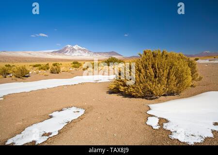 Miniques Hill dans l'Altiplano, désert d'Atacama, région d'Antofagasta, Chili, Amérique du Sud
