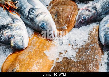 L'angle de la vie toujours élevée de matières premières diverses Poissons frais refroidissement sur lit de glace froide dans les fruits de mer de décrochage du marché. Banque D'Images