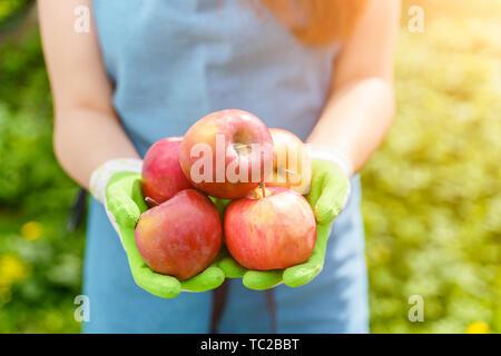 Image de la femme en tablier avec des pommes dans ses mains standing in garden par jour Banque D'Images