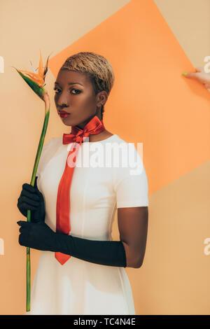 Avec des photos de mode african american woman in black gloves holding Strelitzia flower sur orange et beige Banque D'Images