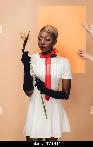Young African American Woman in Black gloves posant avec Strelitzia flower sur orange et beige Banque D'Images
