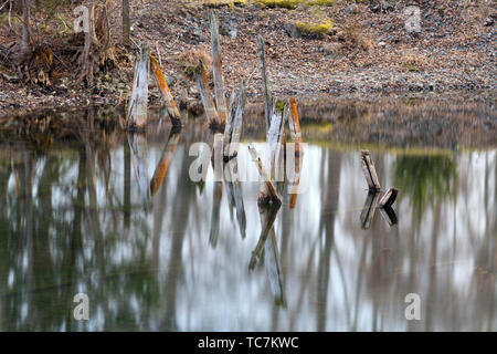 Water reflections in a forest