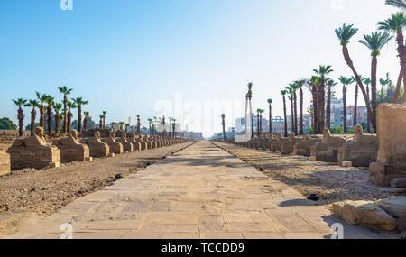 Louxor, Egypte, Sphinx avenue dans le coeur de l'ancienne ville qui a été fouillé et est maintenant en cours de restauration. Banque D'Images