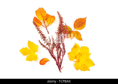 Un bouquet de feuilles d'automne jaune et orange, tourné par le haut sur un fond blanc avec une place pour le texte Banque D'Images